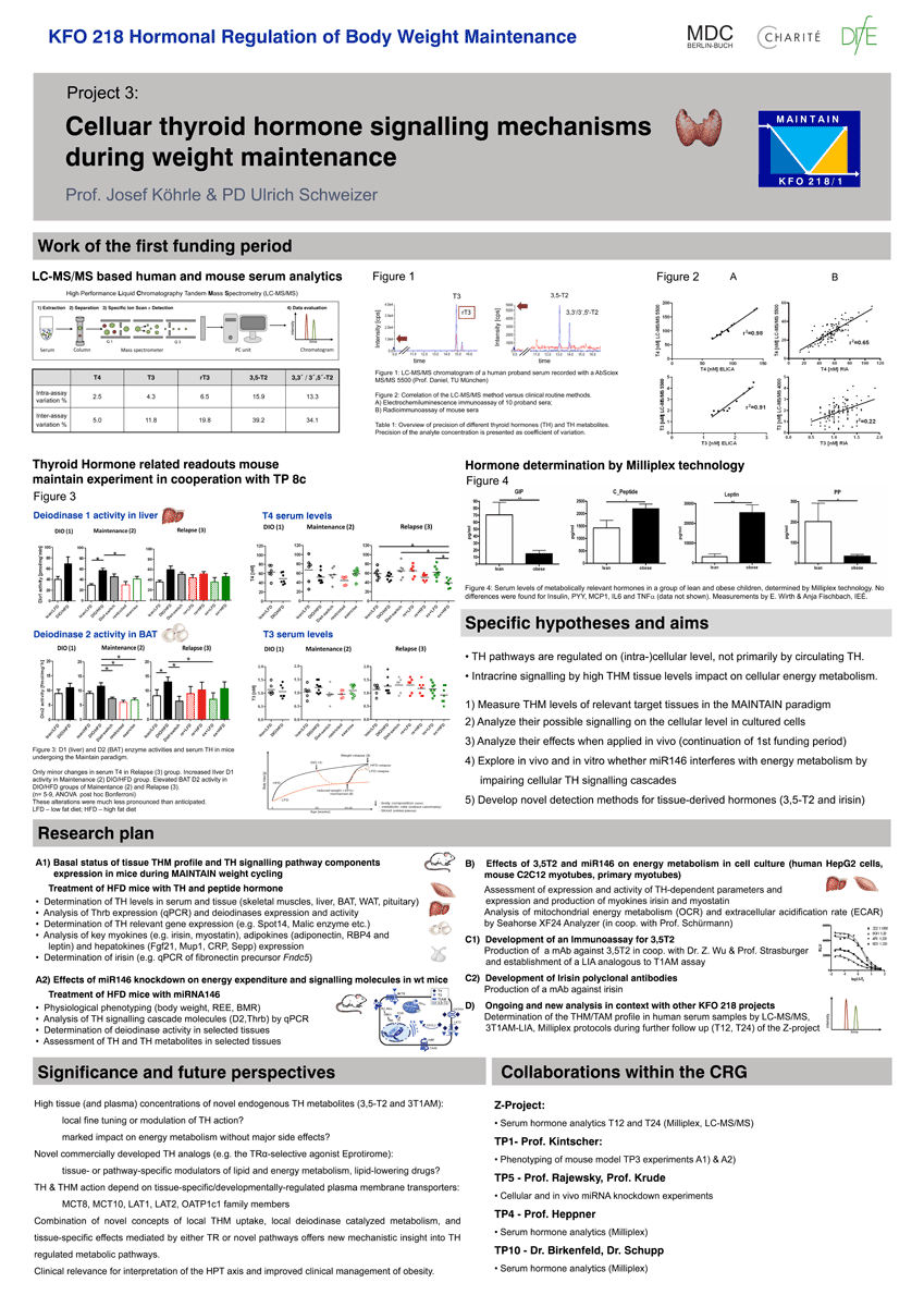 Posterbeispiel Cellular thyroid hormone signalling